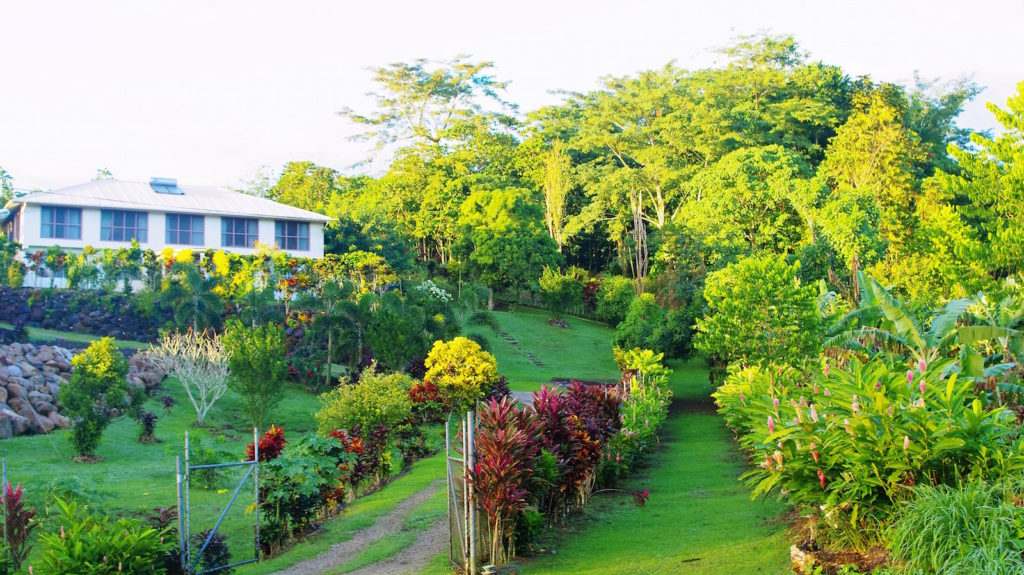 Picture of Home Plantation
